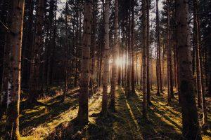bosque_abril2018