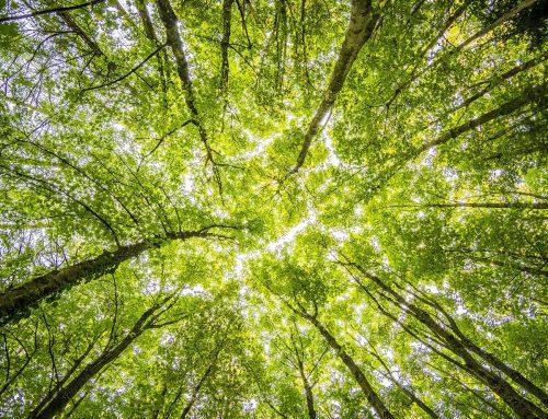 Cederna Garalur ha llevado a cabo 91 actuaciones para impulsar la eficiencia energética en la Montaña de Navarra, y tramita casi 1 millón de euros en ayudas