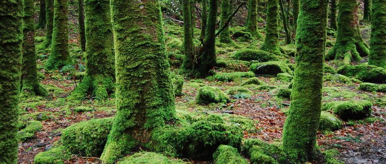 bosque_egia